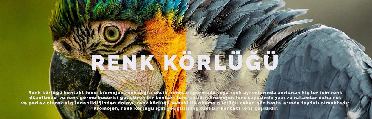 RENK KORLUGU RED